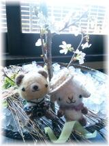*桜開花*