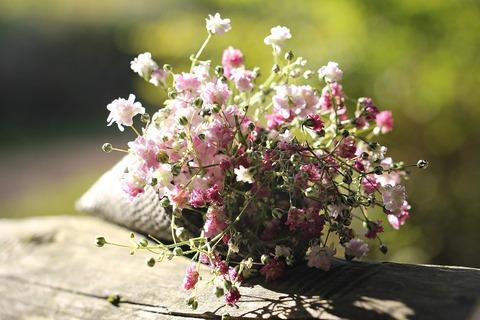 bag-gypsofilia-seeds-1716664_960_720