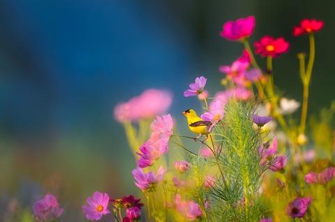 flowers-1835619_960_720