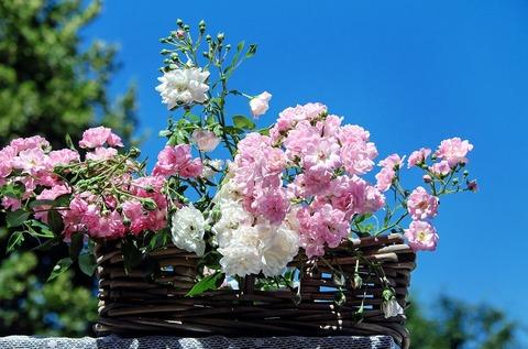 roses-1477992_960_720