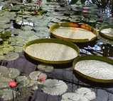 神戸 花鳥園