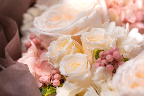 flower420156_TP_V