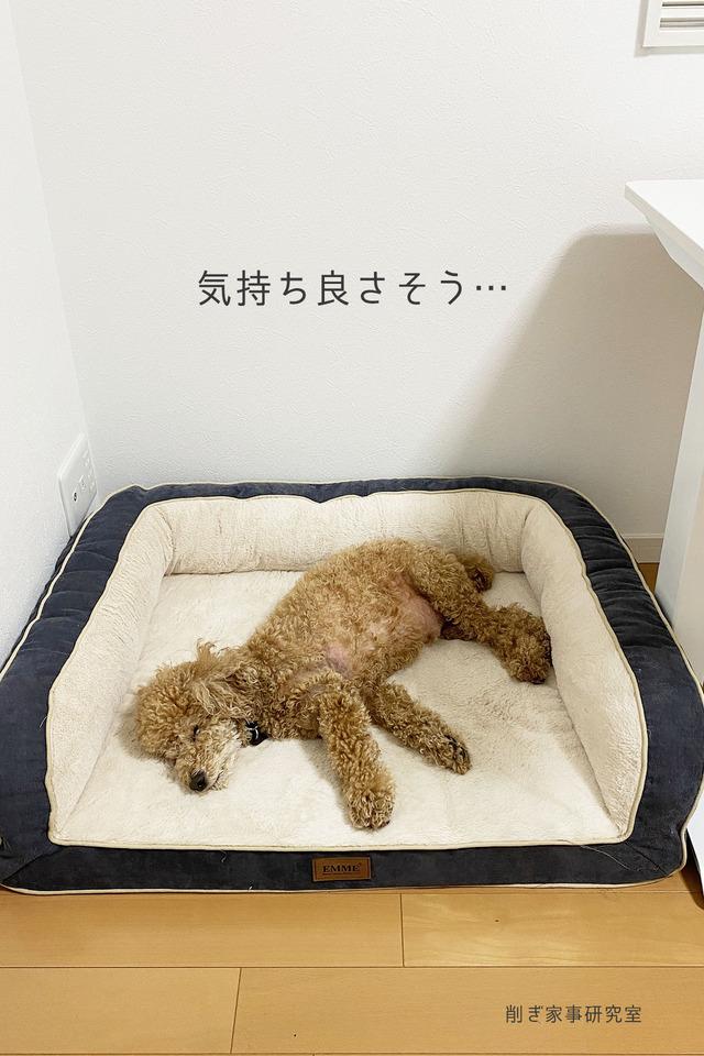 犬ベッド5