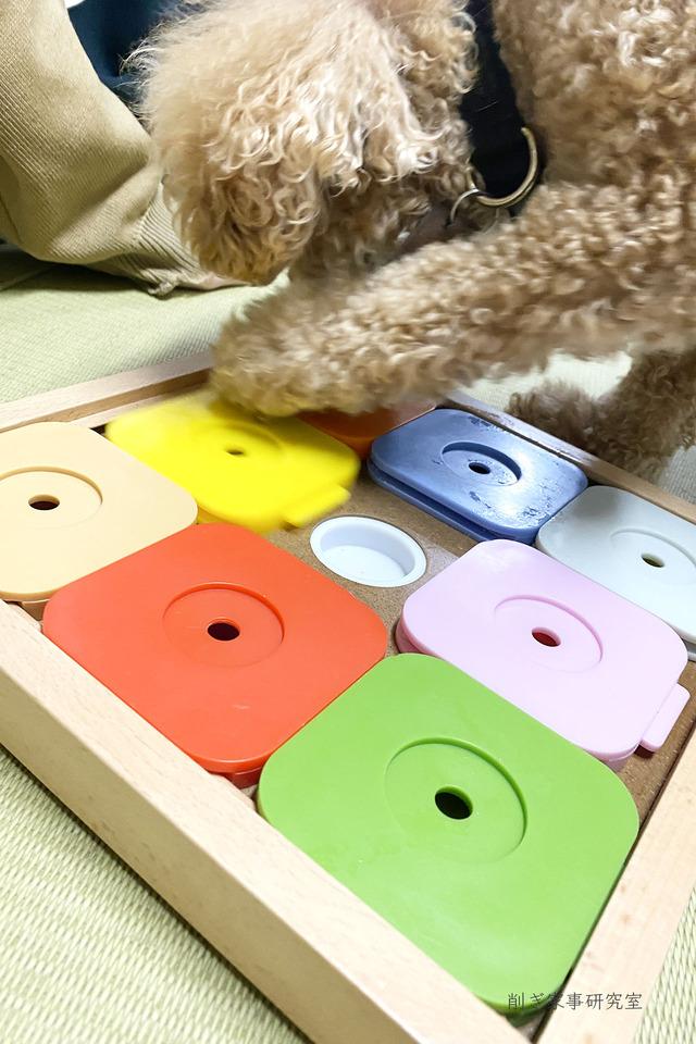 犬 おもちゃ4