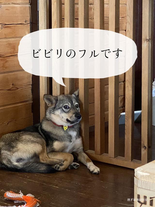 キドックスカフェ 保護犬 元野犬 里親募集