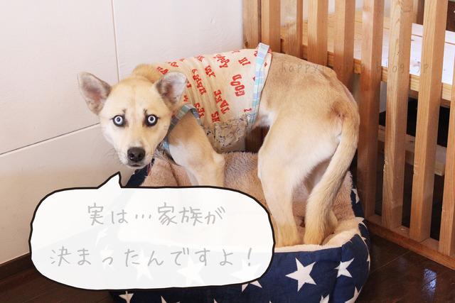 保護犬カフェ つくば キドックス 里親 中型犬ミックス (14)