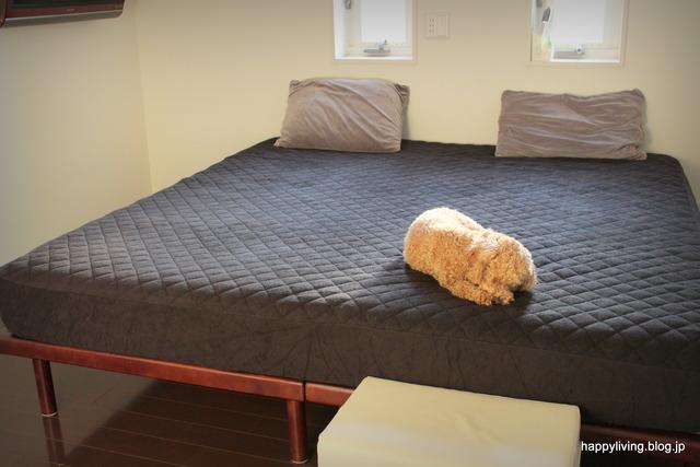 パッド一体型 ボックスシーツ タオル地 寝室 犬 (3)