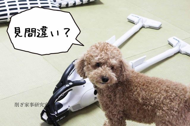 犬 掃除機 嫌い (1)