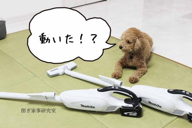 犬 掃除機 嫌い (5)