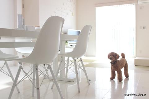 ホワイトインテリア トイプードル 犬と暮らす
