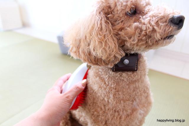 ヘアブラシ タンクルティーザー 犬 コストコ くせ毛 (6)