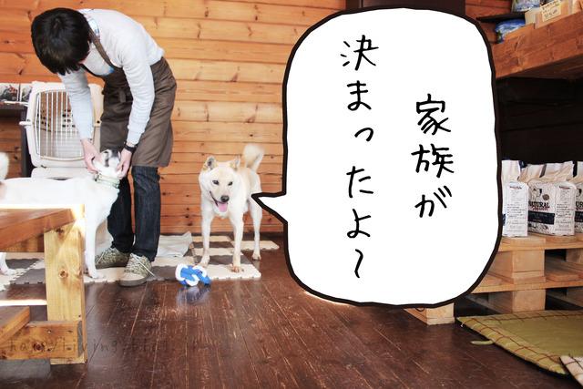 保護犬カフェ つくば キドックス 里親 中型犬ミックス (1)