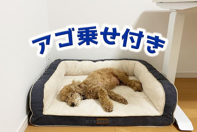 犬ベッド6