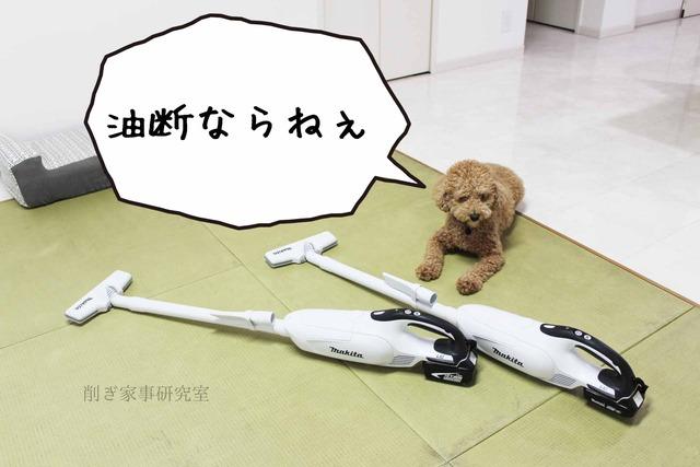 犬 掃除機 嫌い (6)