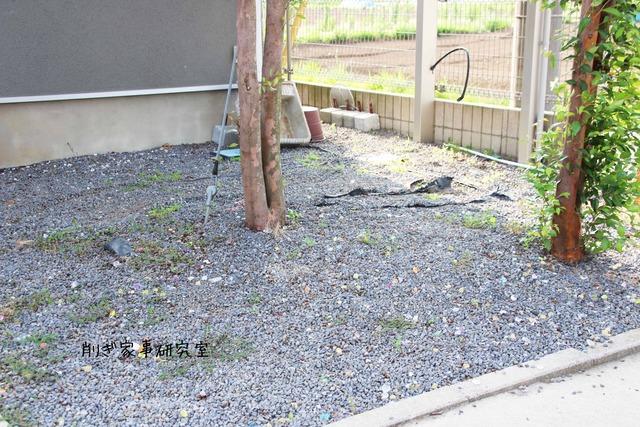 庭 コンクリ 掃除がラク (2)
