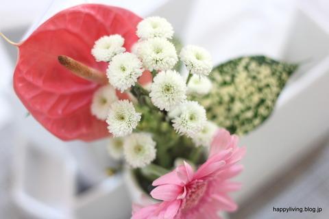 ワンコイン BloomeeLIFE 花 ポスト投函 (1)