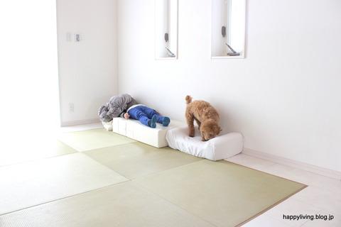 犬 階段 ベッド ソファ クッション (4)