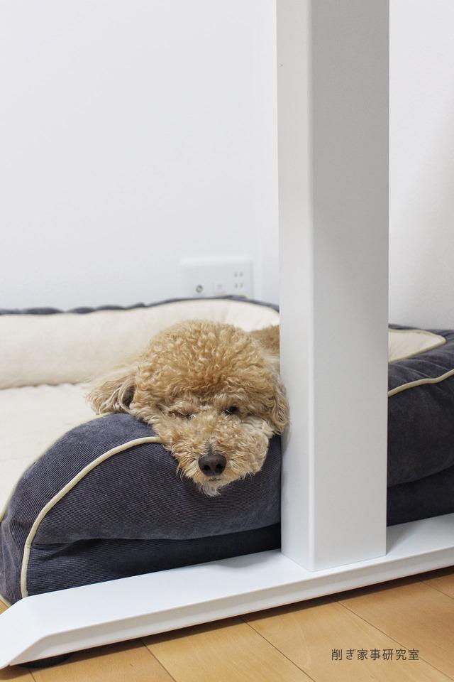 犬ベッド3