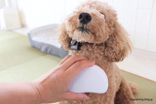 ヘアブラシ タンクルティーザー 犬 コストコ くせ毛 (5)