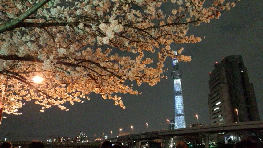 桜とst1