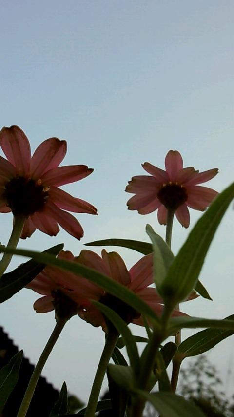 空に向かって咲く花2