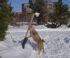 雪かきトレーニング