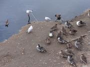 野鳥観察舎2