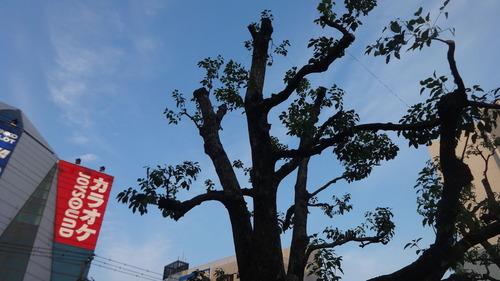 行徳駅前花壇
