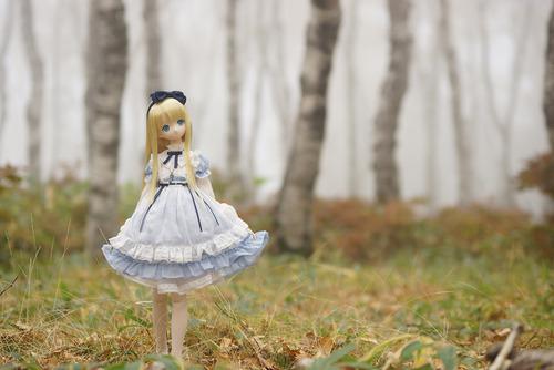 森の中のアリス