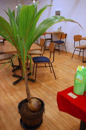 cocowel cafe 4