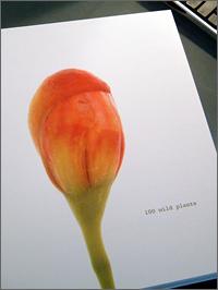 BOOK WILD PLANT2