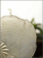 capiz shell 1b