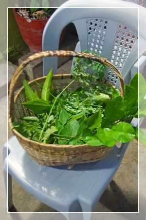 herb 1