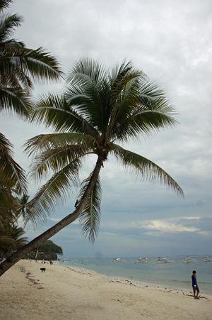 arona beach 2