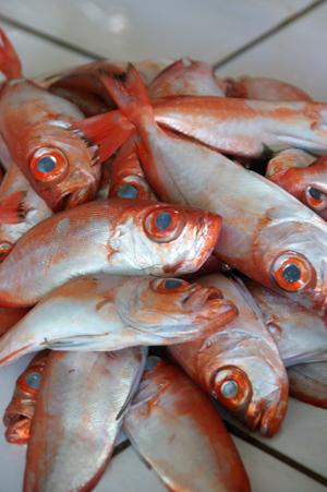 moalboal market 6