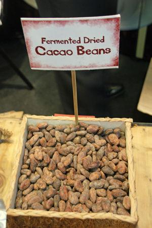 cacao 4