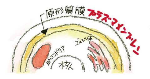 04_プラズマメンブレン
