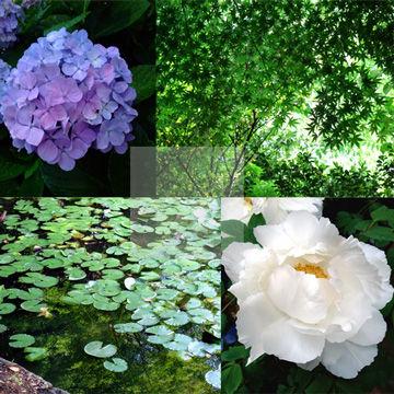 「石と花」サンプル1