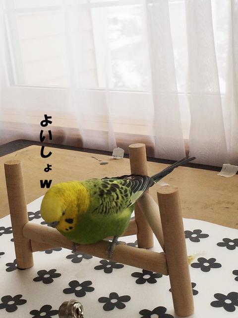 image3 (2)