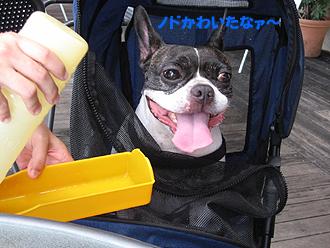 ノドかわいた〜