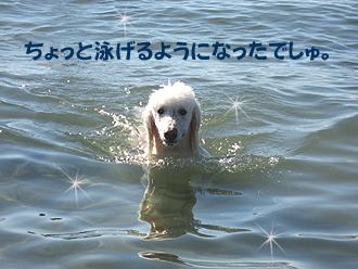 ちょっと泳げるかも。