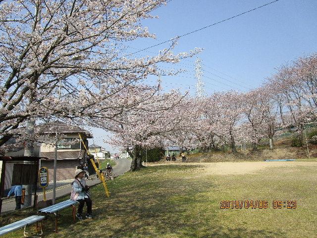 2019-つるつる-桜の下で休憩