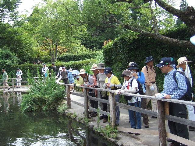 2011-7 金鱗湖周辺散策路周辺