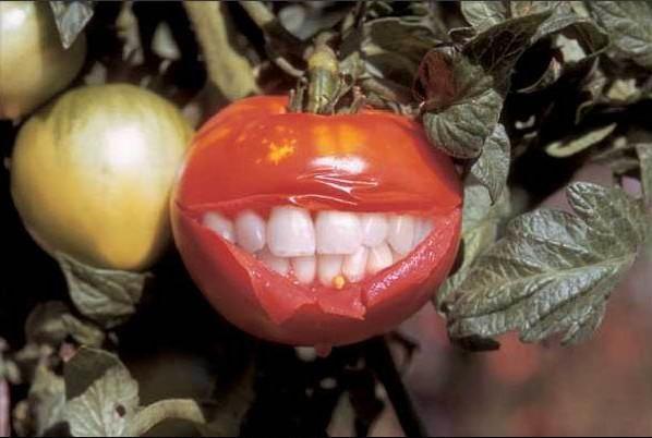SMILEトマト