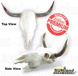 cow skull1