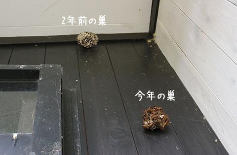 アシナガバチ 退治 駆除しない 共存方法 1