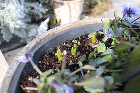 2月 寒波 春感じる 草花 球根