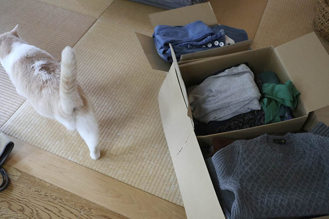 セカンドストリート 衣類 猫の毛 査定激安