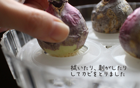 ヒヤシンス 水耕栽培 カビ 対策 画像