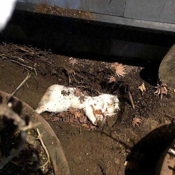 交通事故 知らない猫 庭に埋葬